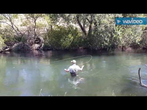 8/10/16 Putah Creek Fly Fishing
