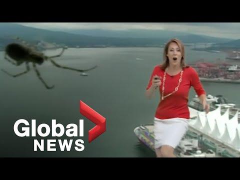 Weather camera spider scares Global BC Meteorologist Kristi Gordon