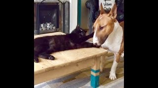 Dog And Cat In LOVE, Cute Pets So Funny Animals