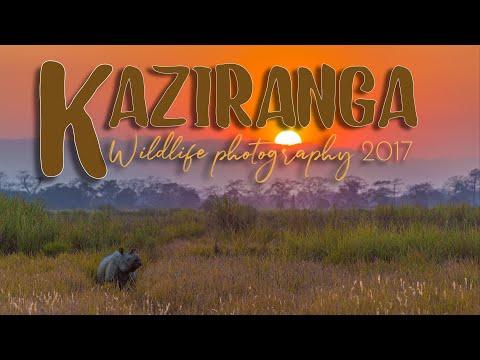 Kaziranga Wildlife Photography  -  Nameri  I  Kaziranga  I  Hoollongapar