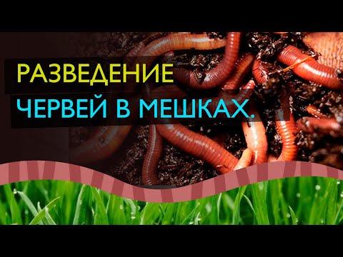 Разведение червей.Обучающие видео