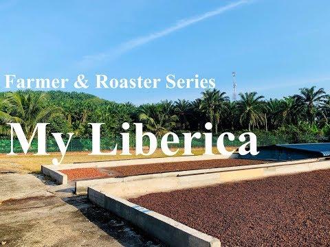 Liberica Coffee Farm & Roaster Series - My Liberica