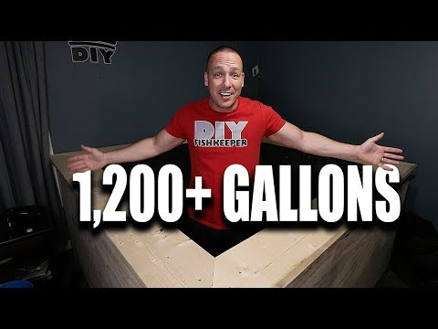 How I built the indoor pond | The King of DIY