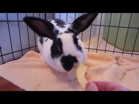 Adoptez la lapine Dorothée! – Adopt Dorothy the rabbit! Vidéo 2