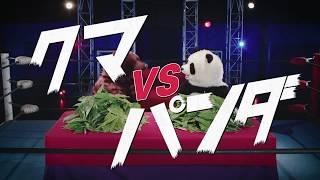 クマとパンダのクマザサ青汁CM第1弾【クマvsパンダ編】 クマザサ早食い...