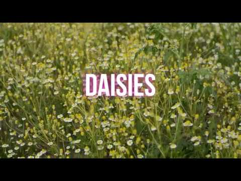 Daisies in the spring - Bees and butterflies Mp3