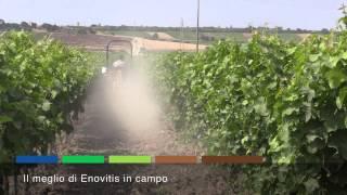 Enovitis in campo 2015 macchine agricole e trattori