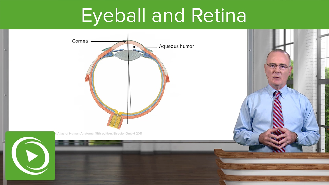 Eyeball and Retina – Brain & Nervous System | Lecturio