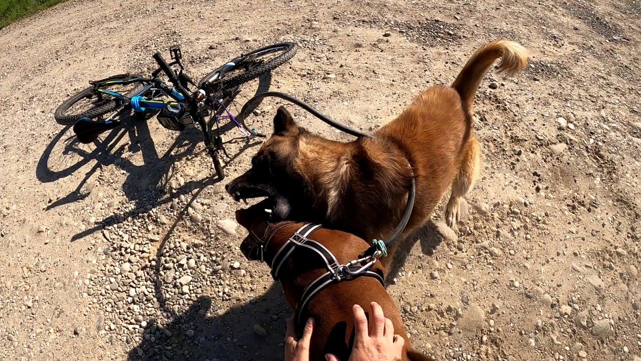 18+ НАПАДЕНИЕ ОВЧАРКИ НА ПИТБУЛЯ!!! Драка собак/ Питбуль vs/ Атака собак/ Собачьи бои/ Питбуль драка