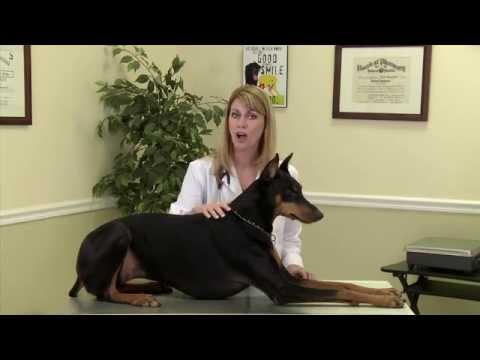 dog-joint-health:-relieving-joint-pain-&-inflammation-(arthritis)