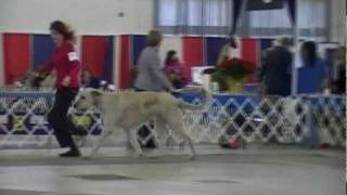 Greater Collin Kennel Club, Dallas Texas 12-06-09 (part 1)