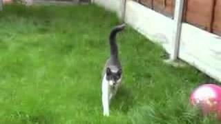 Нападение кошки на человека!!! Вырезано из ликов смерти