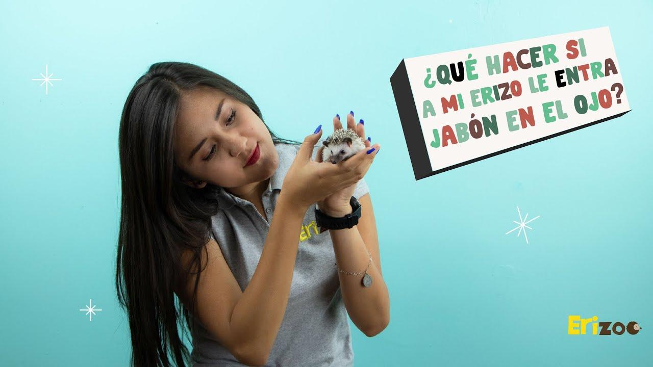 ¿Qué hacer si a mi erizo le entra jabón en el ojo? | Erizoo México