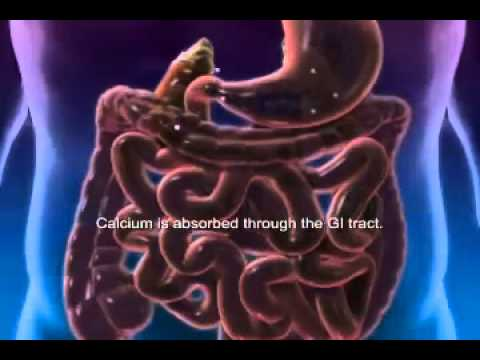 Vitamin D and Calcium Animation.mp4