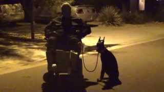 Doberman Pinscher Ava In The Dark On And Off Leash Obedience Training