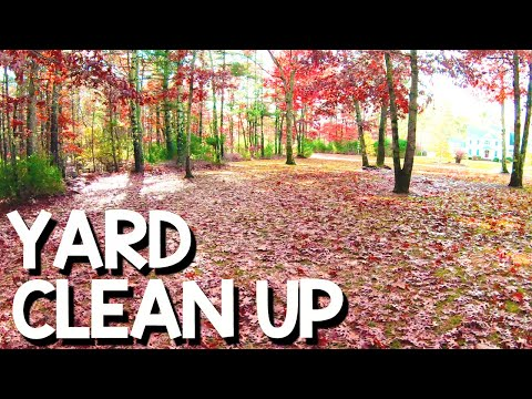 Faster Way to Clean Up Leaves In My Yard