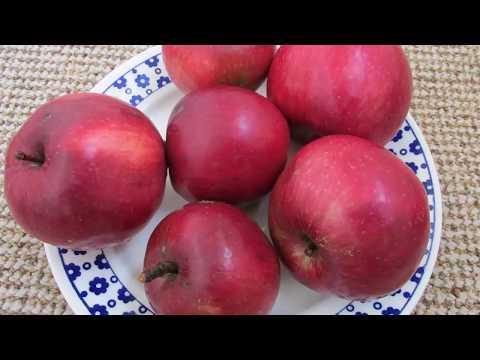 Яблоки Малиновка - любимый осенний сорт