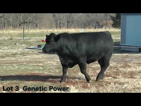 Lot 3 D180 J&K Genetic Power