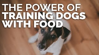 The Power Of Training Dogs With Food With Michael Ellis