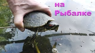 Опять попалась черепаха- отпустил. рыбалка. Fishing angeln la pesca câu cá memancing wędkarstwo 钓鱼