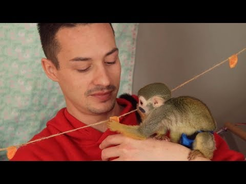 Tony Sandoval on The Breeze - Meet the squirrel monkey that changed this Veteran's life
