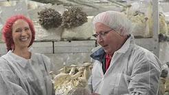 Phillips Mushroom Farm