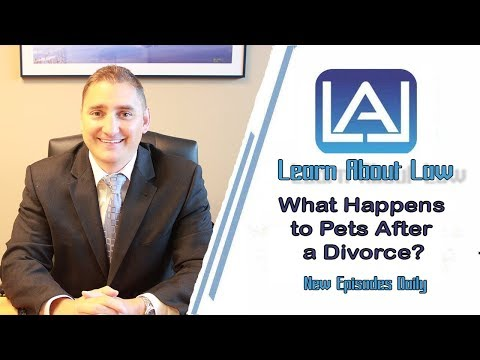 What Happens to Pets in a Divorce?  Illinois Divorce Help - Learn About Law