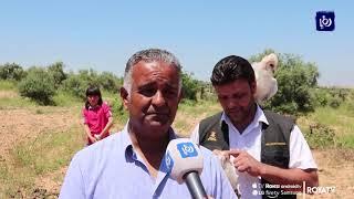 فئران الحقول مشكلة تؤرق مزارعي المحافظة (21-5-2019)