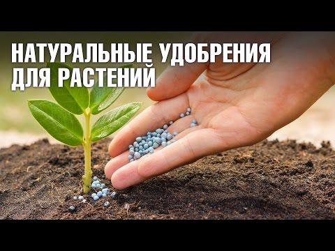 Натуральные удобрения для домашних цветов: ✓кофе ✓сахар ✓банановая кожура ✓дрожжи