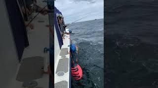 Морская рыбалка на Кольском полуострове в Баренцевом море Баренс