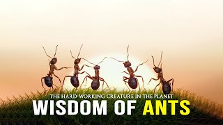 Wisdom Of The Ants - Best Motivational Video