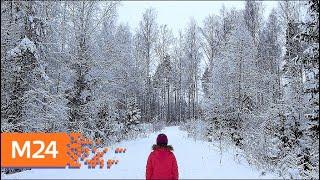 Найден шестилетний мальчик, который провел всю ночь в лесу - Москва 24