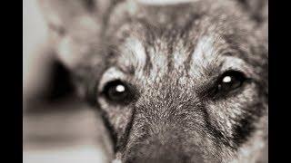 """Закон """"О защите животных"""" нужен сейчас!"""