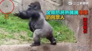 金剛的逆襲 千萬別惹怒牠|三立新聞網SETN.com