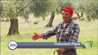 Recuperación del pastoreo en la Alhambra de Granada