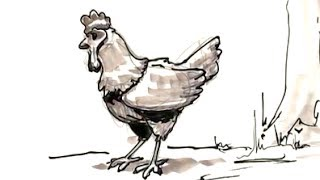 how to draw a chicken huhn poulet 雞 鶏 pollo tavuk курица kurczak