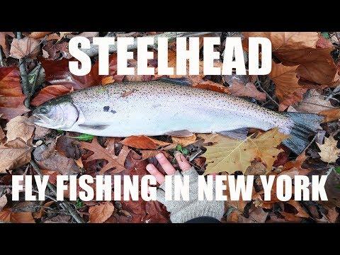 FLY FISHING For STEELHEAD In New York