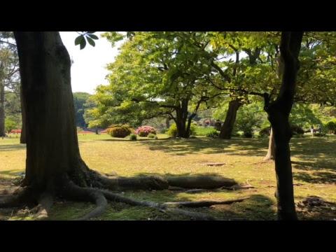 LIVE- Tea Time Adventure in Tokyo Take 2! | EDO-Era Park