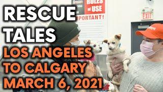 Rescue Tales | Fur-ever Homes Rescue March 2021, California Rescue