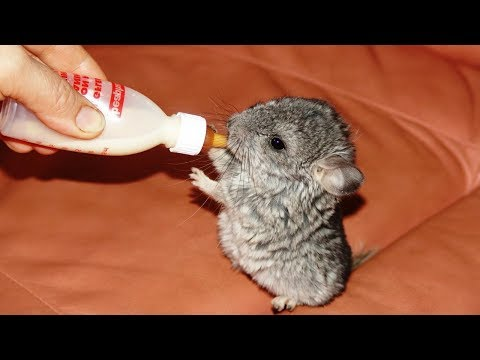 Humans Bottle Feeding Cute Baby Animals - Cute Animal Babies Videos || NEW