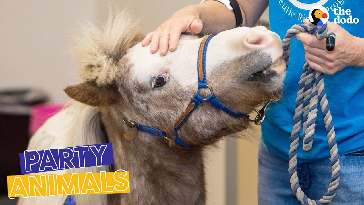 Mini Horse Heroes Surprised by the Community They Help | The Dodo Party Animals