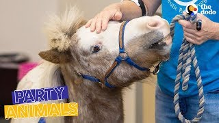 Mini Horse Heroes Surprised by the Community They Help | The Dodo Party Animals thumbnail