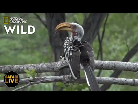 Safari Live - Day 282 | Nat Geo Wild