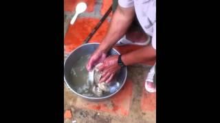 Làm thịt ốc khổng lồ tại Côn Đảo