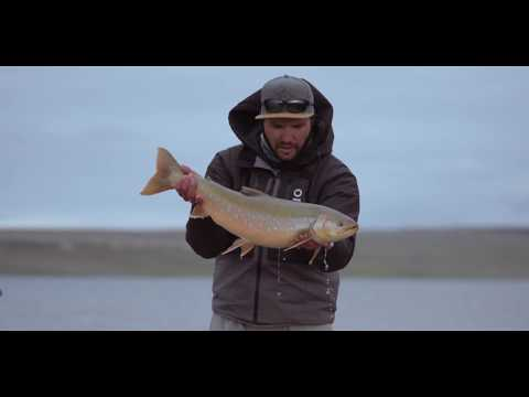 Fly Fishing Monster Arctic Char In Nunavut