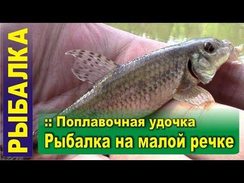 Рыбалка на поплавок. Поплавочная удочка на малой реке. Пескарь, чебак, елец и уклейка