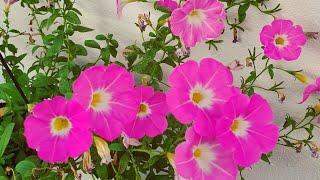 7 Plantas Floríferas De Pequeno Porte