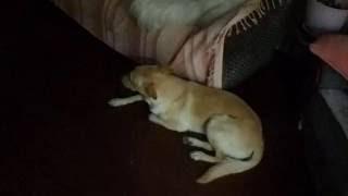 Скрытая камера. Чем занимается собака, когда никого нет дома. Смотреть с 03:30 минуты.