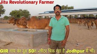 इससे बढ़िया नही है कोई Business. -HF गायों को छोड़कर अब GIR गायो का Pure A2 दूध पिलाते है Jodhpur में।