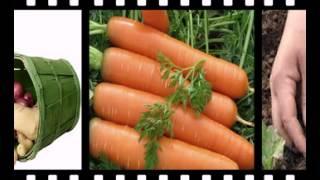 купить элитные семена овощей(http://goo.gl/6XT3nS Самый большой выбор семян! Заходите, в крупнейший интернет-магазин!, 2015-02-05T19:29:24.000Z)